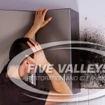 mold removal missoula, mold removal services, mold repair missoula